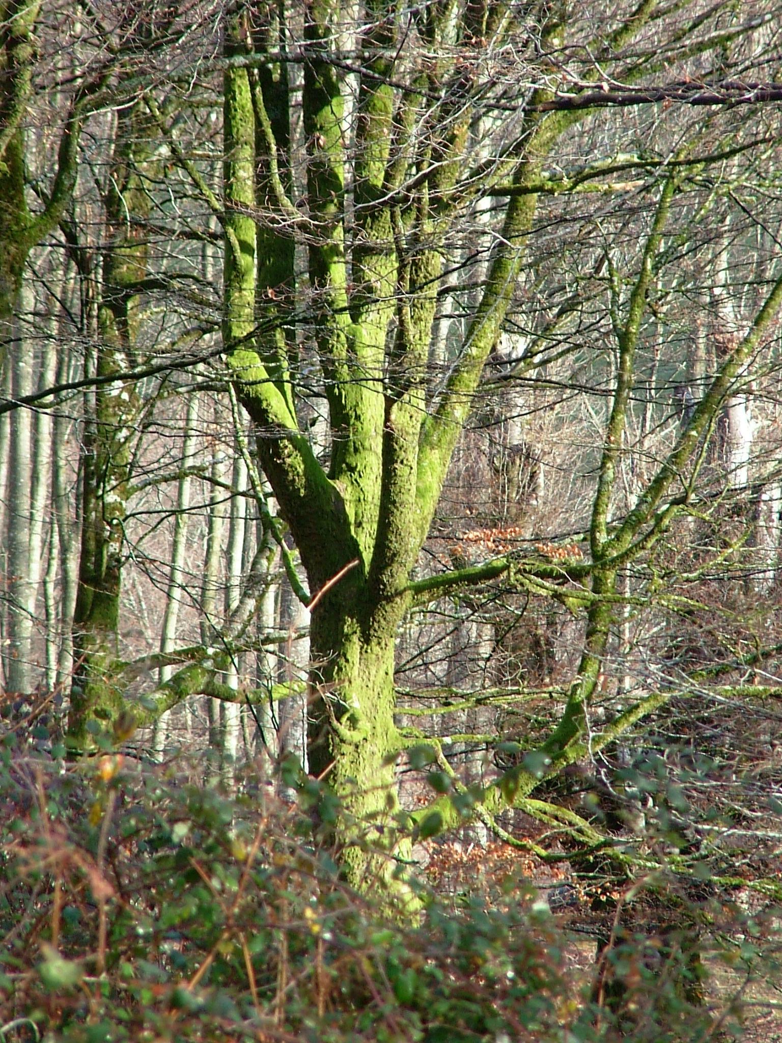 Bosque fantástico incluso en invierno