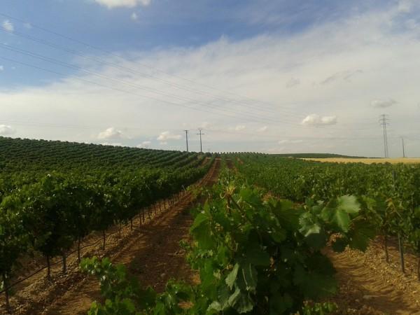 ruta del vino Rueda 2