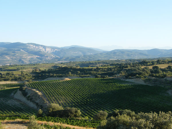 DO SOMONTANO  Vendimia Chardonnay (Autor JOSÉ BIELSA) panorámica 1