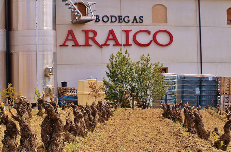 araico-768x506