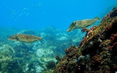 Calahonda, un mundo (submarino) por descubrir